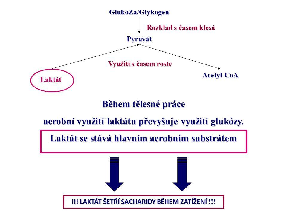 Pyruvát Laktát Acetyl-CoA GlukoZa/Glykogen Využití s časem roste Rozklad s časem klesá Během tělesné práce aerobní využití laktátu převyšuje využití g