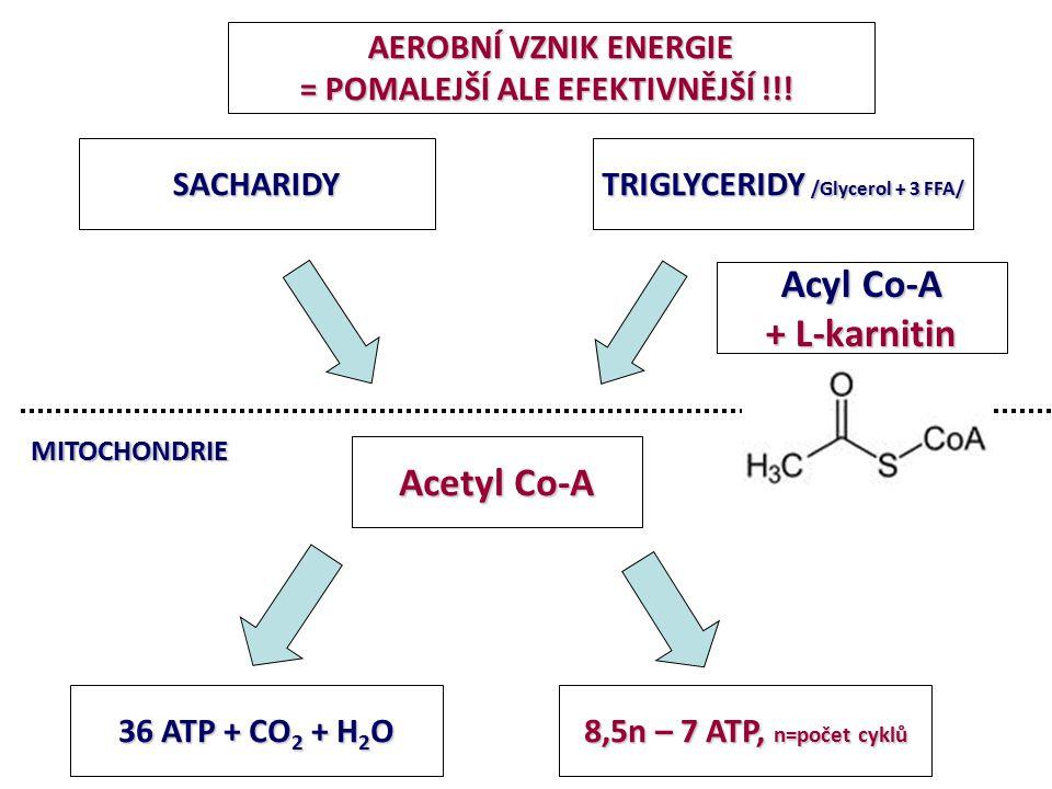 AEROBNÍ VZNIK ENERGIE = POMALEJŠÍ ALE EFEKTIVNĚJŠÍ !!! Acetyl Co-A 36 ATP + CO 2 + H 2 O 8,5n – 7 ATP, n=počet cyklů MITOCHONDRIE SACHARIDY TRIGLYCERI