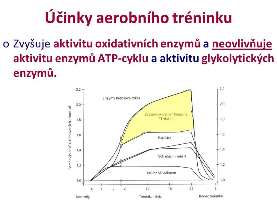 Účinky aerobního tréninku oZvyšuje aktivitu oxidativních enzymů a neovlivňuje aktivitu enzymů ATP-cyklu a aktivitu glykolytických enzymů.