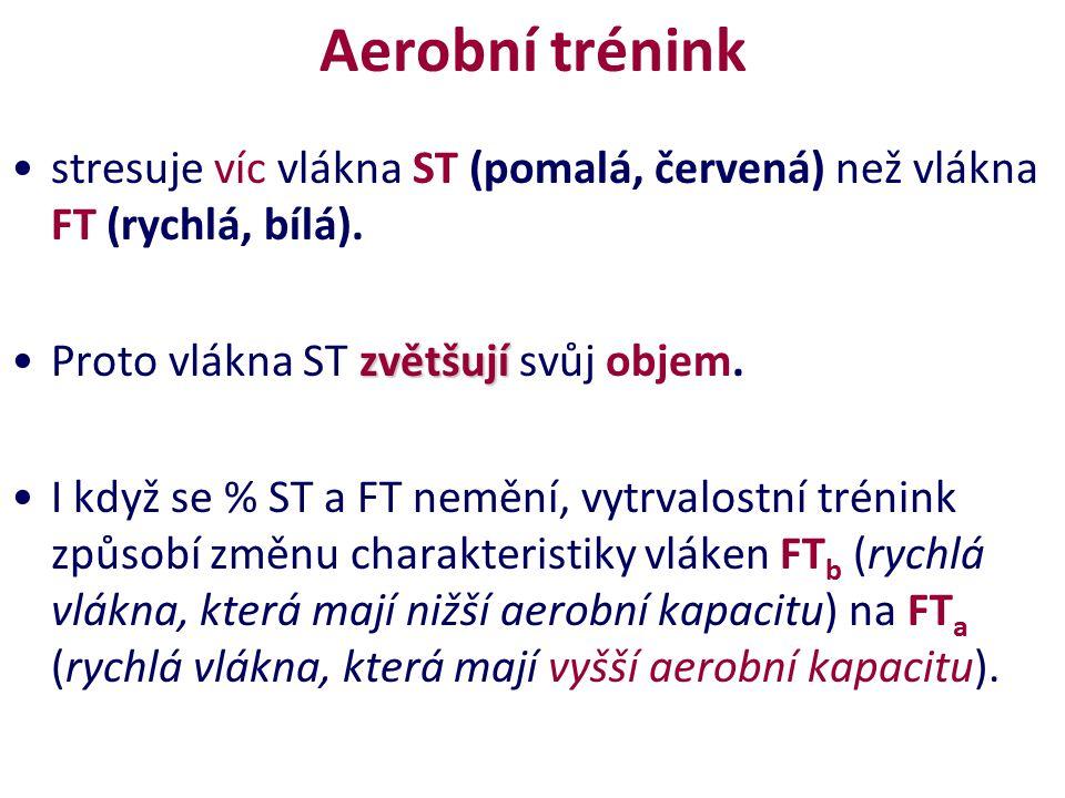 Aerobní trénink stresuje víc vlákna ST (pomalá, červená) než vlákna FT (rychlá, bílá). zvětšujíProto vlákna ST zvětšují svůj objem. I když se % ST a F