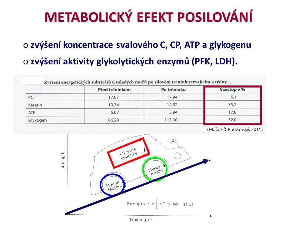 o zvýšení koncentrace svalového C, CP, ATP a glykogenu o zvýšení aktivity glykolytických enzymů (PFK, LDH). METABOLICKÝ EFEKT POSILOVÁNÍ (Máček & Radv