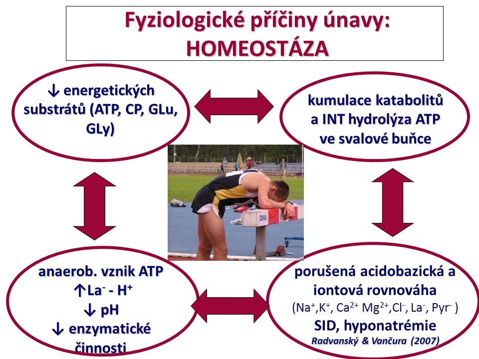 Fyziologické příčiny únavy: HOMEOSTÁZA Fyziologické příčiny únavy: HOMEOSTÁZA anaerob. vznik ATP ↑La - - H + ↑La - - H + ↓ pH ↓ enzymatické činnosti k