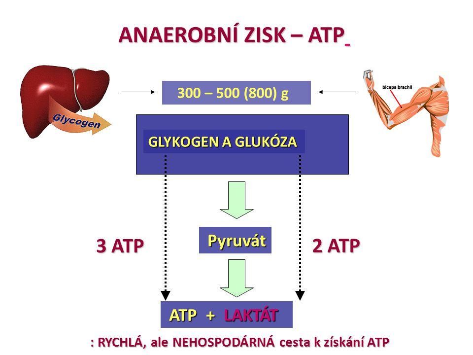 ANAEROBNÍ ZISK – ATP GLYKOGEN A GLUKÓZA ATP + LAKTÁT ATP + LAKTÁT 300 – 500 (800) g Pyruvát Pyruvát 3 ATP 2 ATP : RYCHLÁ, ale NEHOSPODÁRNÁ cesta k zís