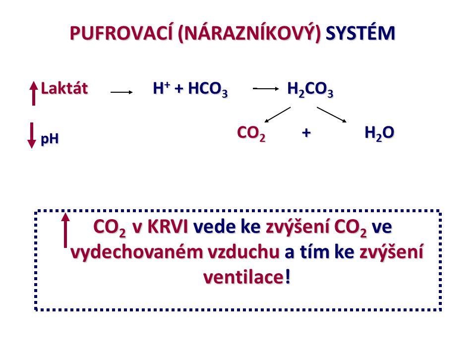 PUFROVACÍ (NÁRAZNÍKOVÝ) SYSTÉM PUFROVACÍ (NÁRAZNÍKOVÝ) SYSTÉM Laktát H + + HCO 3 H 2 CO 3 pH CO 2 + H 2 O CO 2 v KRVI vede ke zvýšení CO 2 ve vydechov