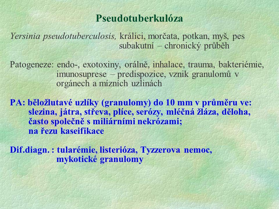 Pseudotuberkulóza Yersinia pseudotuberculosis, králíci, morčata, potkan, myš, pes subakutní – chronický průběh Patogeneze: endo-, exotoxiny, orálně, i
