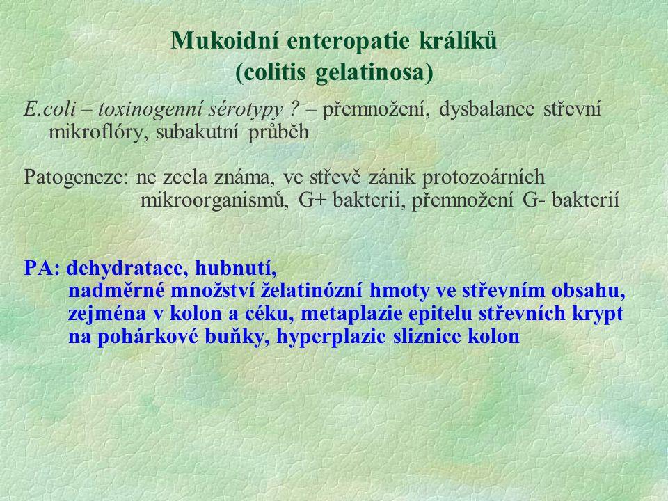 Mukoidní enteropatie králíků (colitis gelatinosa) E.coli – toxinogenní sérotypy ? – přemnožení, dysbalance střevní mikroflóry, subakutní průběh Patoge