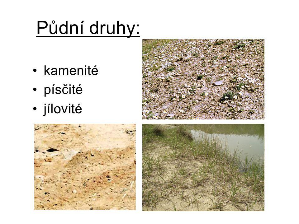 Půdní druhy: kamenité písčité jílovité