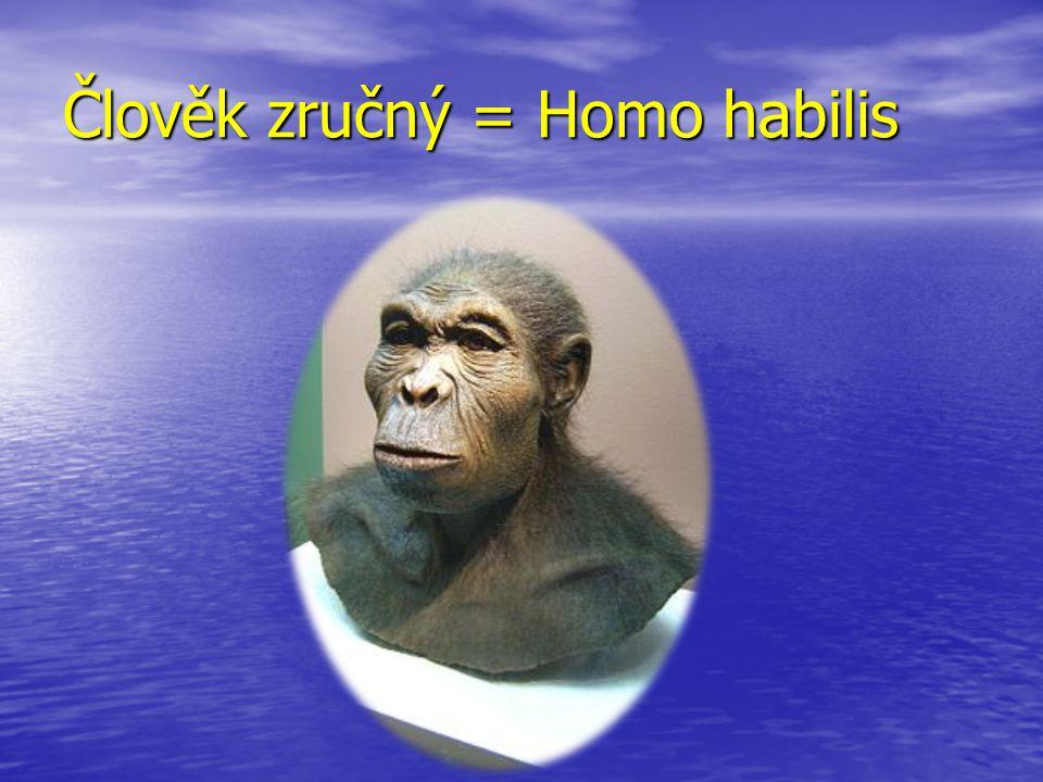 Člověk zručný = Homo habilis
