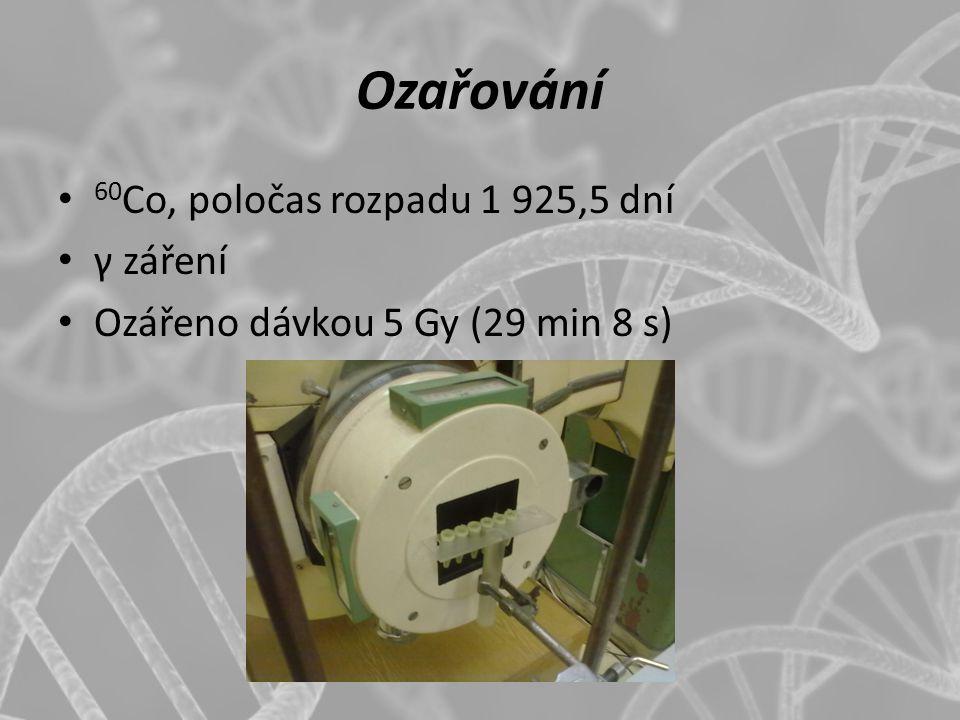 Ozařování 60 Co, poločas rozpadu 1 925,5 dní γ záření Ozářeno dávkou 5 Gy (29 min 8 s)