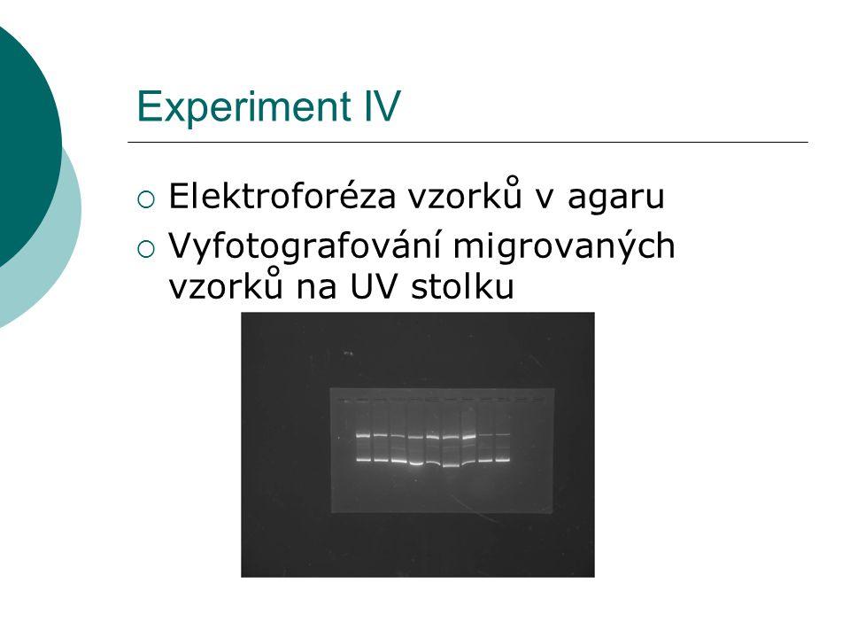 Experiment IV  Elektroforéza vzorků v agaru  Vyfotografování migrovaných vzorků na UV stolku