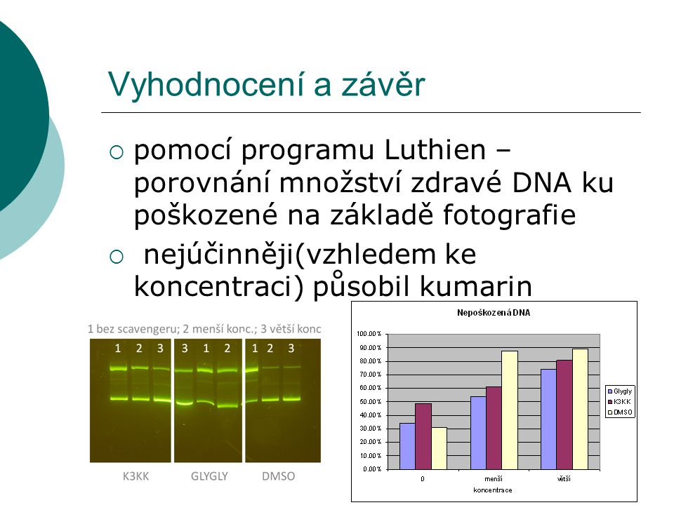 Vyhodnocení a závěr  pomocí programu Luthien – porovnání množství zdravé DNA ku poškozené na základě fotografie  nejúčinněji(vzhledem ke koncentraci) působil kumarin