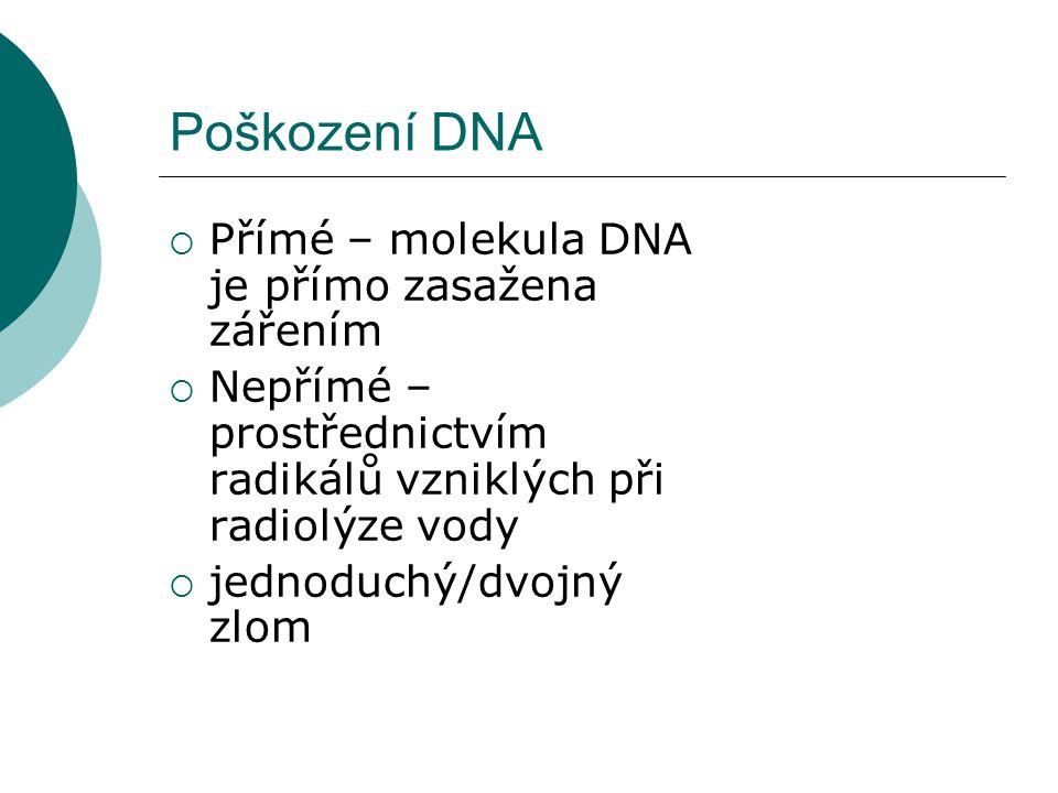 Poškození DNA  Přímé – molekula DNA je přímo zasažena zářením  Nepřímé – prostřednictvím radikálů vzniklých při radiolýze vody  jednoduchý/dvojný zlom