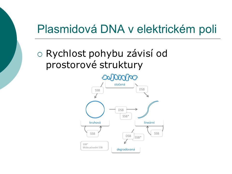 Plasmidová DNA v elektrickém poli  Rychlost pohybu závisí od prostorové struktury