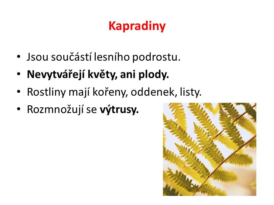 Kapradiny Jsou součástí lesního podrostu. Nevytvářejí květy, ani plody. Rostliny mají kořeny, oddenek, listy. Rozmnožují se výtrusy.