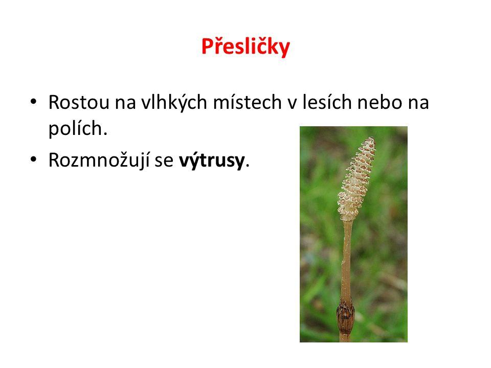 Přesličky Rostou na vlhkých místech v lesích nebo na polích. Rozmnožují se výtrusy.