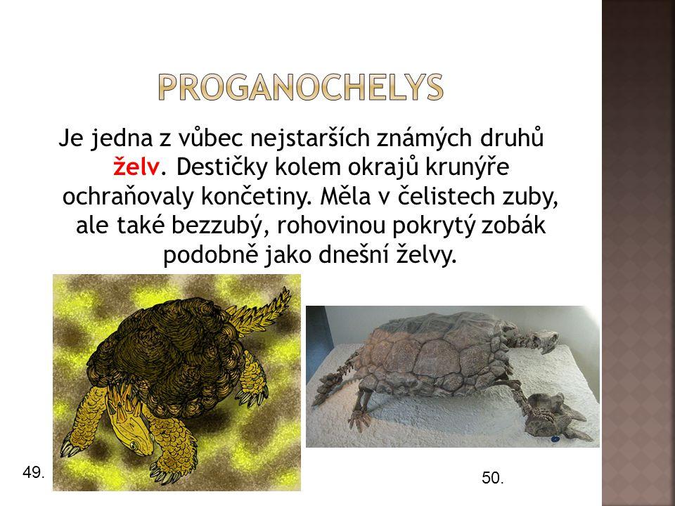 Je jedna z vůbec nejstarších známých druhů želv.