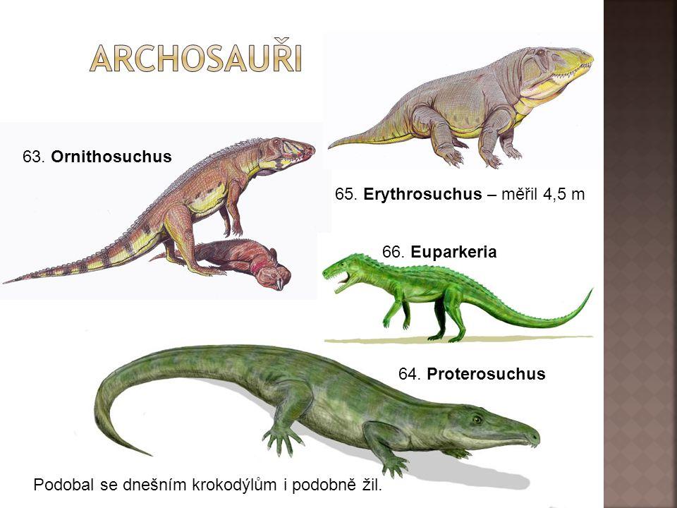 63.Ornithosuchus 64. Proterosuchus Podobal se dnešním krokodýlům i podobně žil.