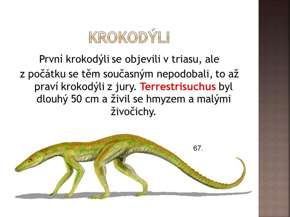 První krokodýli se objevili v triasu, ale z počátku se těm současným nepodobali, to až praví krokodýli z jury.