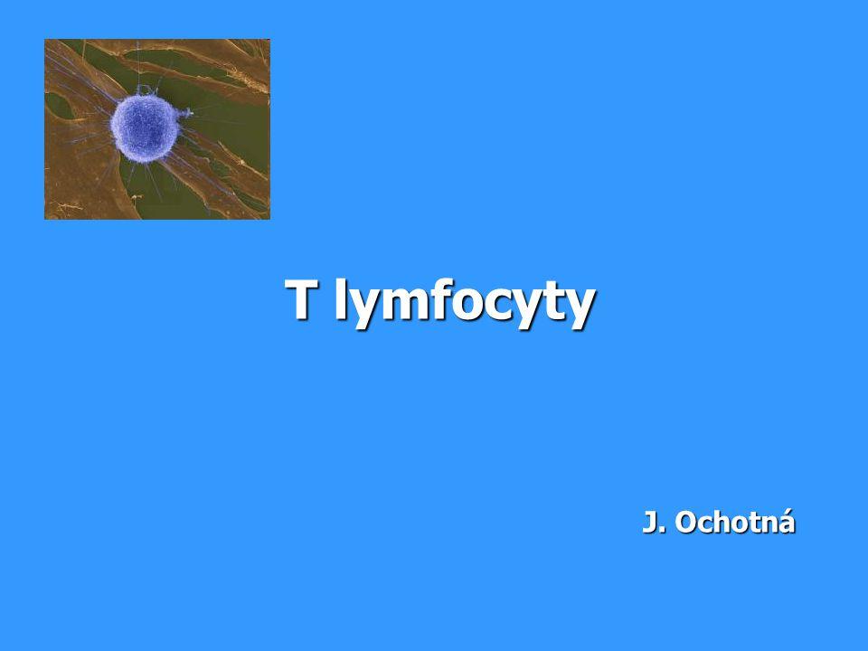 T lymfocyty J. Ochotná