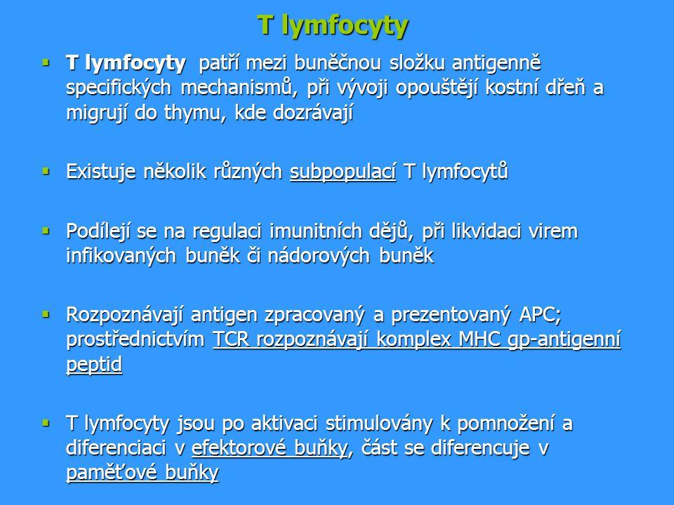 T lymfocyty  T lymfocyty patří mezi buněčnou složku antigenně specifických mechanismů, při vývoji opouštějí kostní dřeň a migrují do thymu, kde dozrá
