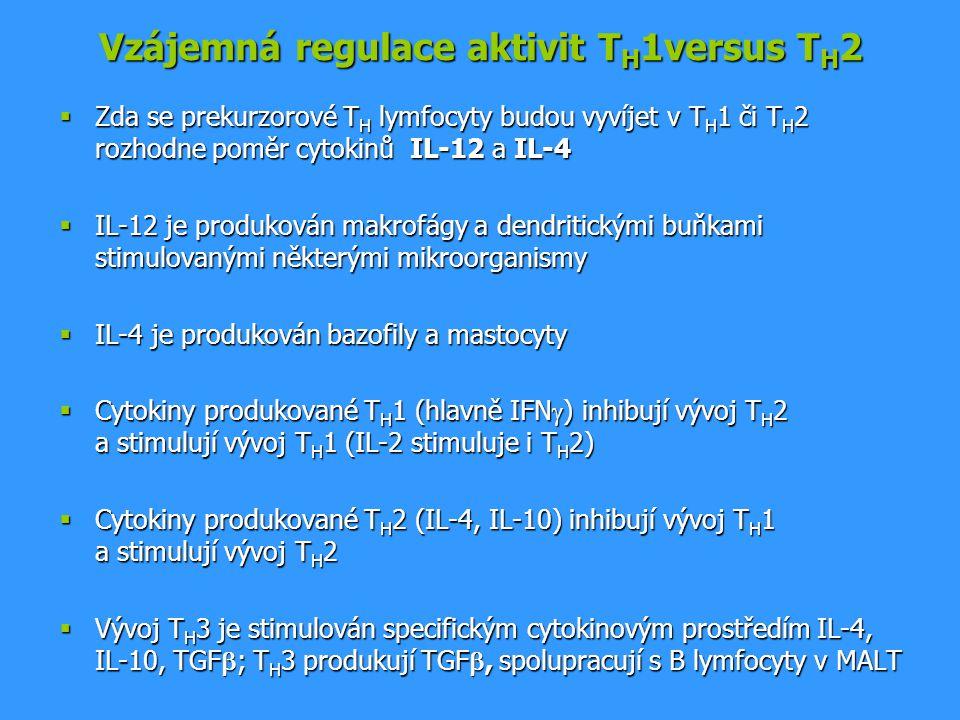 Vzájemná regulace aktivit T H 1versus T H 2  Zda se prekurzorové T H lymfocyty budou vyvíjet v T H 1 či T H 2 rozhodne poměr cytokinů IL-12 a IL-4 