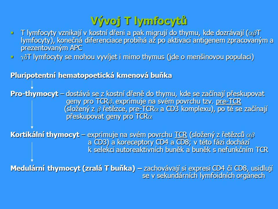 Vývoj T lymfocytů  T lymfocyty vznikají v kostní dřeni a pak migrují do thymu, kde dozrávají (  T lymfocyty), konečná diferenciace probíhá až po ak