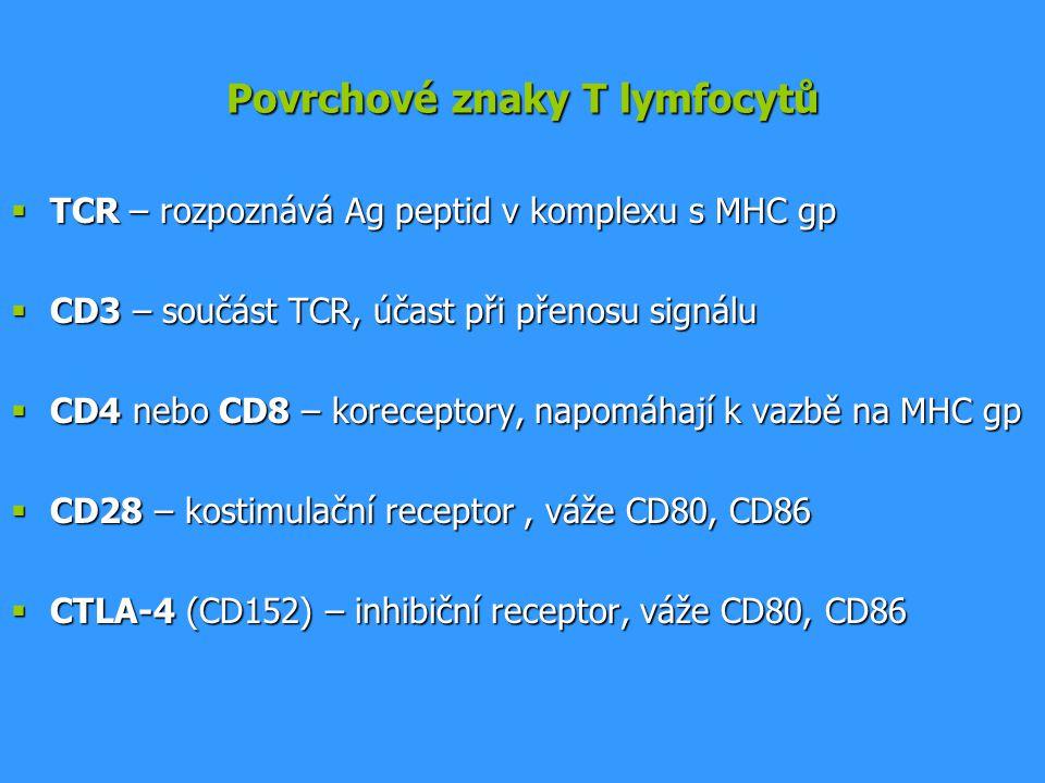Povrchové znaky T lymfocytů  TCR – rozpoznává Ag peptid v komplexu s MHC gp  CD3 – součást TCR, účast při přenosu signálu  CD4 nebo CD8 – korecepto