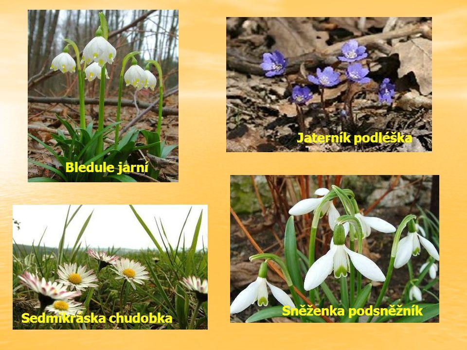 Rostliny na jaře – přírodověda 4.ročník ZŠ Použitý software: držitel licence – ZŠ J.