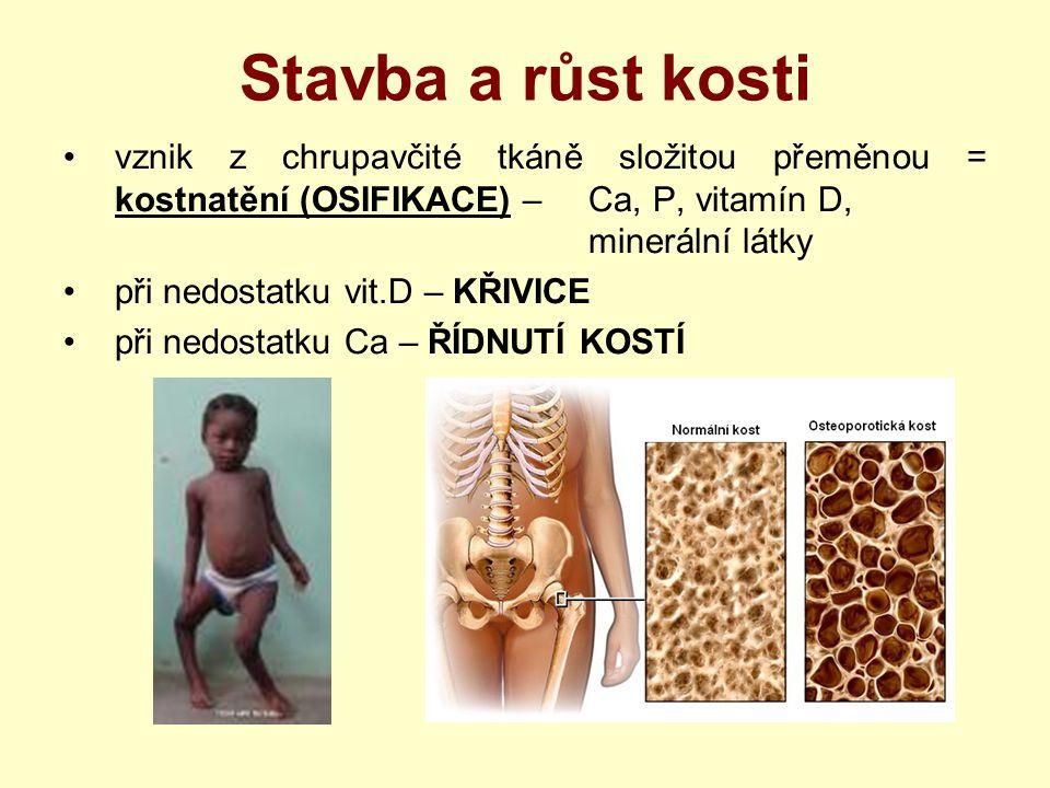 Stavba a růst kosti vznik z chrupavčité tkáně složitou přeměnou = kostnatění (OSIFIKACE) – Ca, P, vitamín D, minerální látky při nedostatku vit.D – KŘ