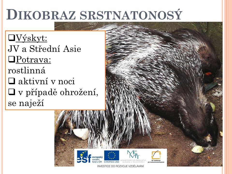 D IKOBRAZ SRSTNATONOSÝ  Výskyt: JV a Střední Asie  Potrava: rostlinná  aktivní v noci  v případě ohrožení, se naježí