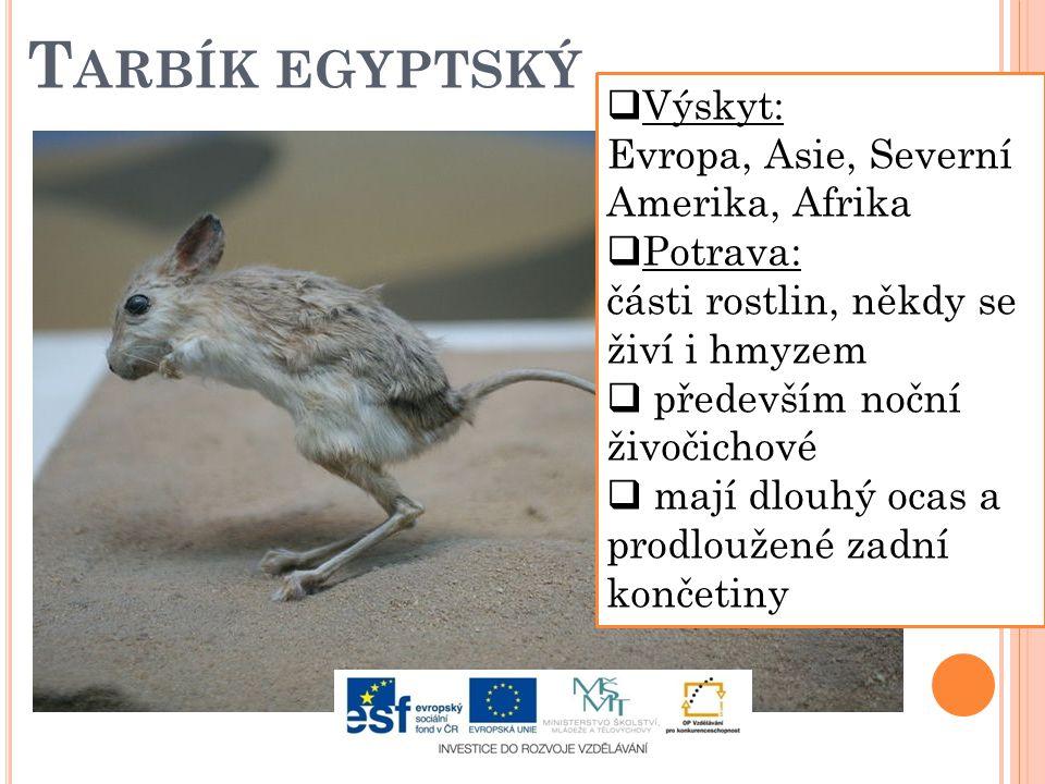 T ARBÍK EGYPTSKÝ  Výskyt: Evropa, Asie, Severní Amerika, Afrika  Potrava: části rostlin, někdy se živí i hmyzem  především noční živočichové  mají