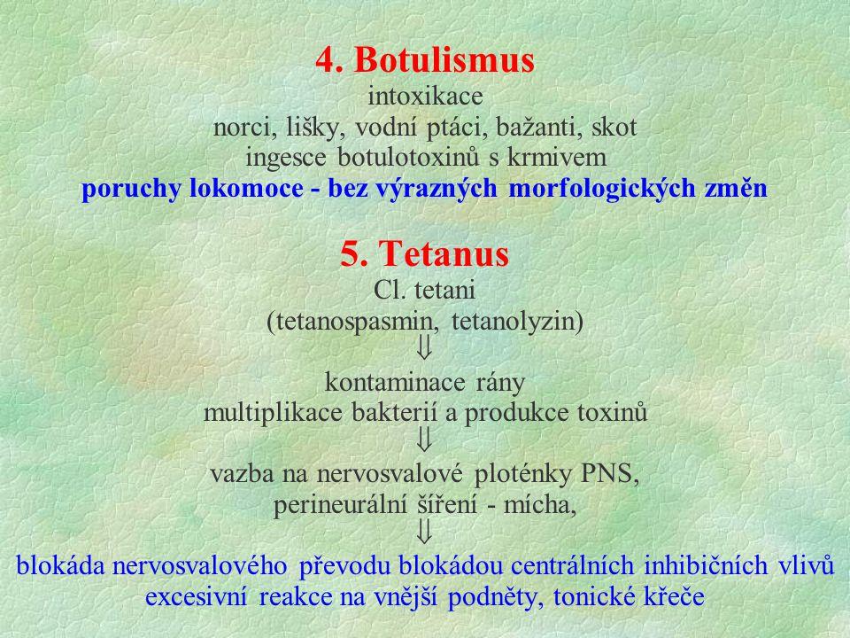 4. Botulismus intoxikace norci, lišky, vodní ptáci, bažanti, skot ingesce botulotoxinů s krmivem poruchy lokomoce - bez výrazných morfologických změn