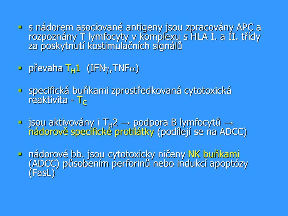  s nádorem asociované antigeny jsou zpracovány APC a rozpoznány T lymfocyty v komplexu s HLA I. a II. třídy za poskytnutí kostimulačních signálů  př