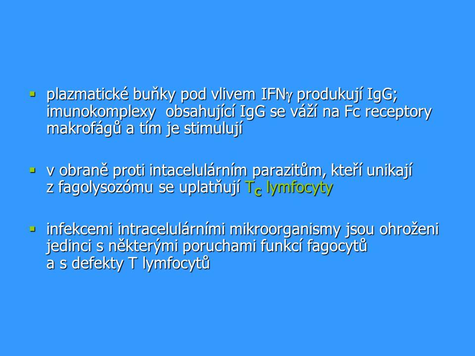  plazmatické buňky pod vlivem IFN  produkují IgG; imunokomplexy obsahující IgG se váží na Fc receptory makrofágů a tím je stimulují  v obraně proti
