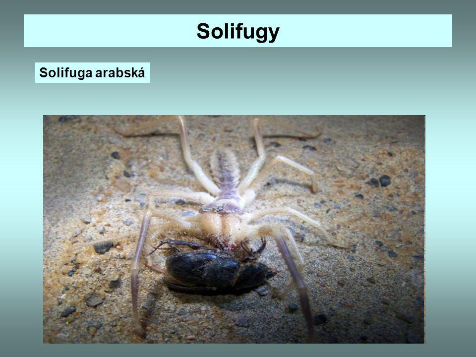 Zajímavosti Lidožraví pavouci.