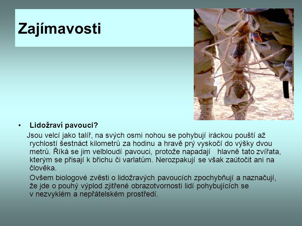 Zajímavosti Lidožraví pavouci? Jsou velcí jako talíř, na svých osmi nohou se pohybují iráckou pouští až rychlostí šestnáct kilometrů za hodinu a hravě