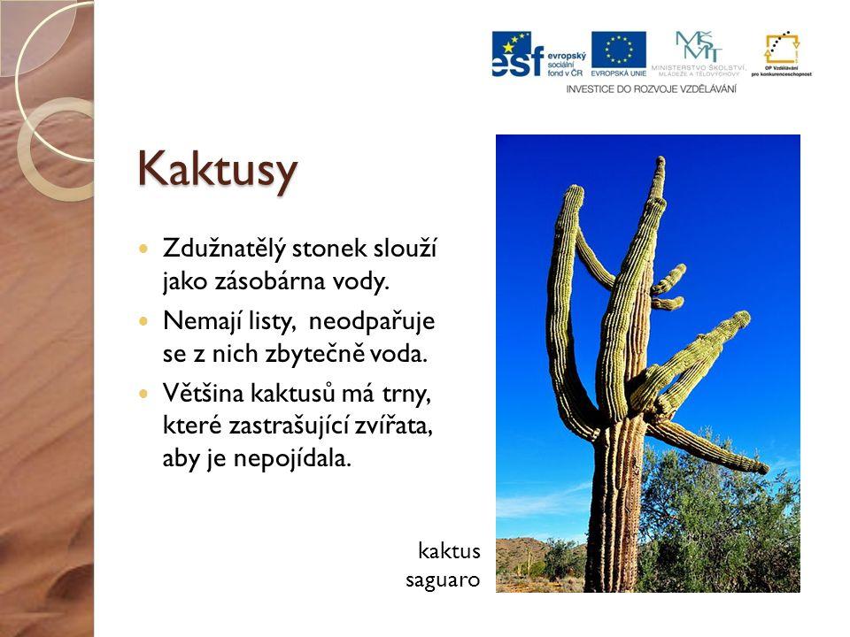 Kaktusy Zdužnatělý stonek slouží jako zásobárna vody. Nemají listy, neodpařuje se z nich zbytečně voda. Většina kaktusů má trny, které zastrašující zv