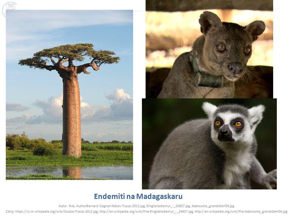 Endemiti na Madagaskaru Autor: Rvb, AuthorBernard Gagnon Název: Fossa-2012.jpg, Ringtailedlemur_-_24937.jpg, Adansonia_grandidieri04.jpg Zdroj: https://cs.m.wikipedia.org/wiki/Soubor:Fossa-2012.jpg, http://en.wikipedia.org/wiki/File:Ringtailedlemur_-_24937.jpg, http://en.wikipedia.org/wiki/File:Adansonia_grandidieri04.jpg