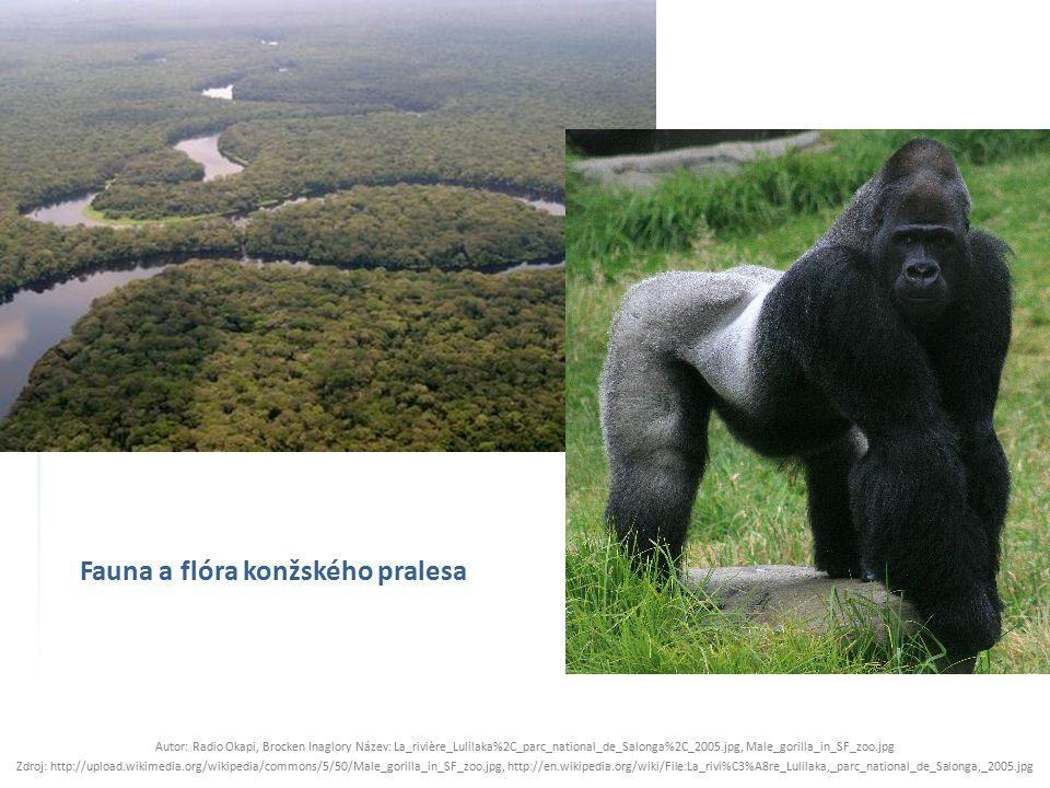 Fauna a flóra konžského pralesa Autor: Radio Okapi, Brocken Inaglory Název: La_rivière_Lulilaka%2C_parc_national_de_Salonga%2C_2005.jpg, Male_gorilla_in_SF_zoo.jpg Zdroj: http://upload.wikimedia.org/wikipedia/commons/5/50/Male_gorilla_in_SF_zoo.jpg, http://en.wikipedia.org/wiki/File:La_rivi%C3%A8re_Lulilaka,_parc_national_de_Salonga,_2005.jpg