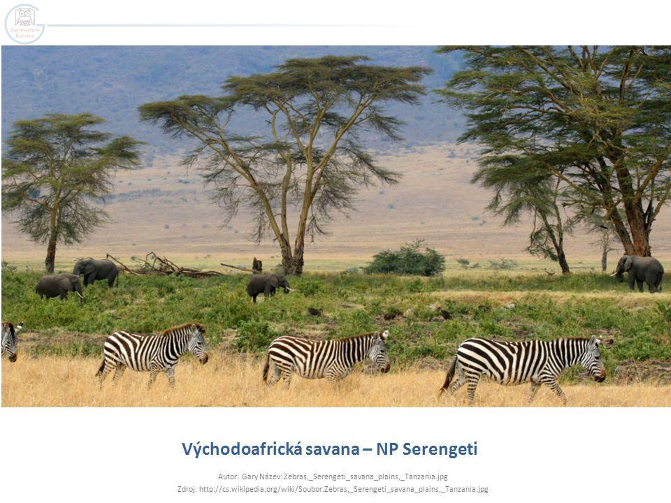 Východoafrická savana – NP Serengeti Autor: Gary Název: Zebras,_Serengeti_savana_plains,_Tanzania.jpg Zdroj: http://cs.wikipedia.org/wiki/Soubor:Zebras,_Serengeti_savana_plains,_Tanzania.jpg