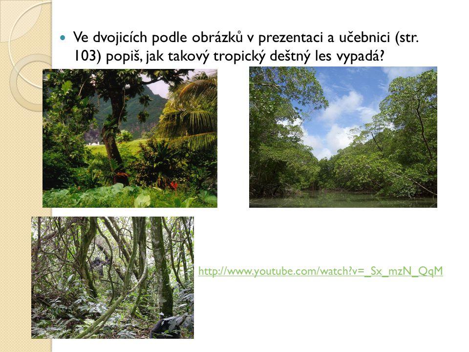 Ve dvojicích podle obrázků v prezentaci a učebnici (str. 103) popiš, jak takový tropický deštný les vypadá? http://www.youtube.com/watch?v=_Sx_mzN_QqM