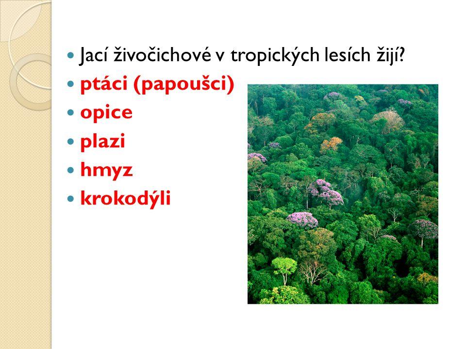 Jací živočichové v tropických lesích žijí ptáci (papoušci) opice plazi hmyz krokodýli