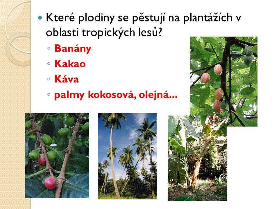Které plodiny se pěstují na plantážích v oblasti tropických lesů.