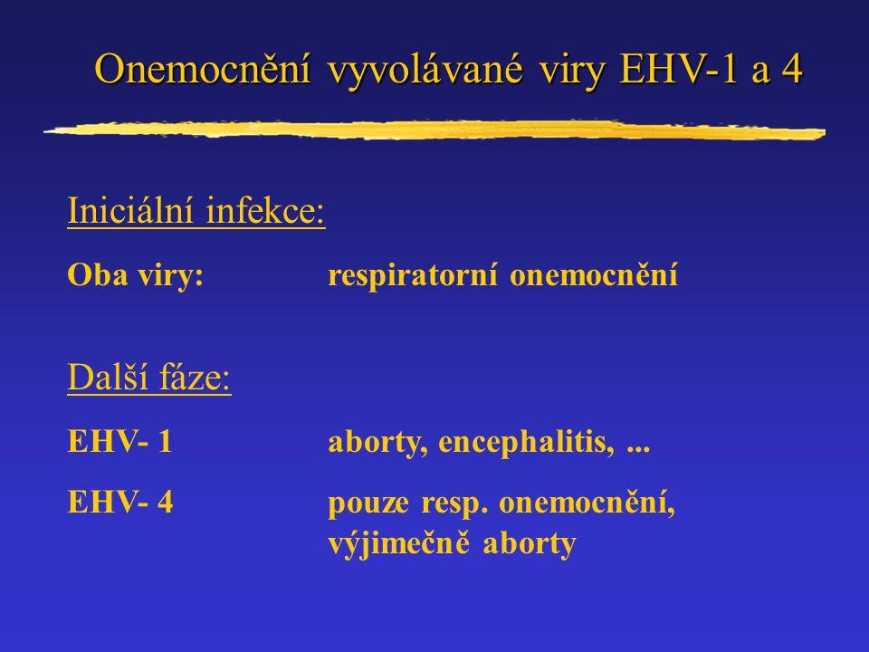 Onemocnění vyvolávané viry EHV-1 a 4 Iniciální infekce: Oba viry:respiratorní onemocnění Další fáze: EHV- 1aborty, encephalitis,... EHV- 4pouze resp.