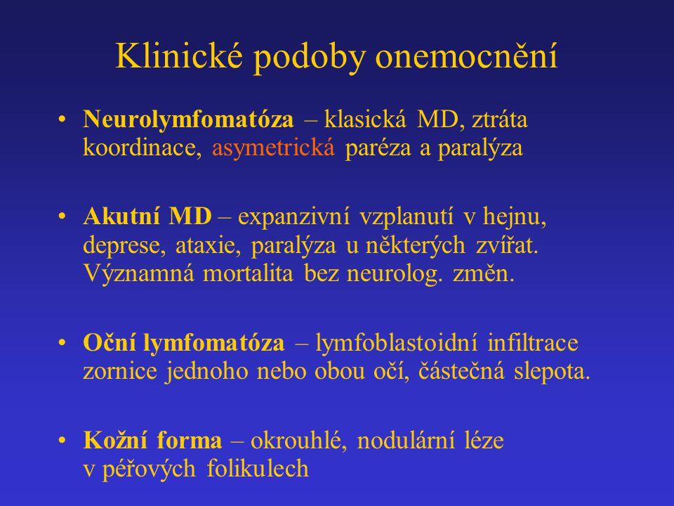 Klinické podoby onemocnění Neurolymfomatóza – klasická MD, ztráta koordinace, asymetrická paréza a paralýza Akutní MD – expanzivní vzplanutí v hejnu,
