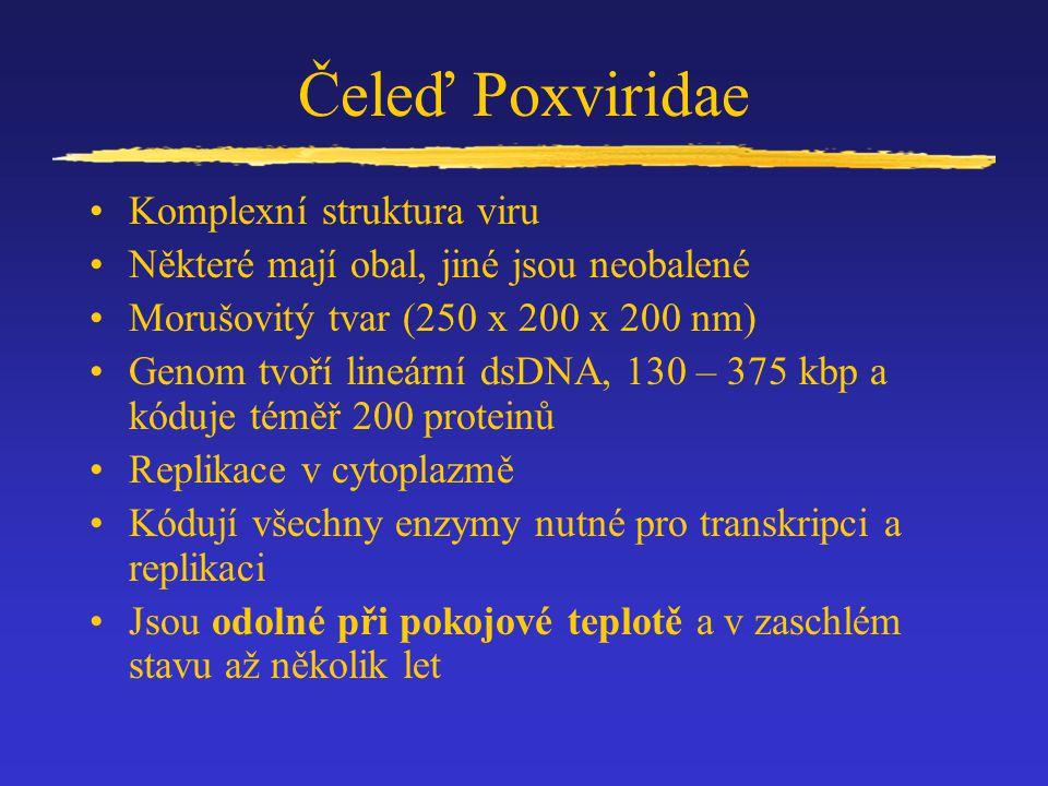 Čeleď Poxviridae Komplexní struktura viru Některé mají obal, jiné jsou neobalené Morušovitý tvar (250 x 200 x 200 nm) Genom tvoří lineární dsDNA, 130