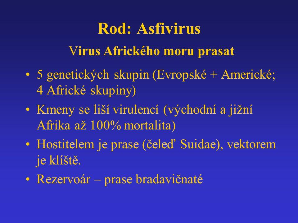 Rod: Asfivirus Virus Afrického moru prasat 5 genetických skupin (Evropské + Americké; 4 Africké skupiny) Kmeny se liší virulencí (východní a jižní Afr