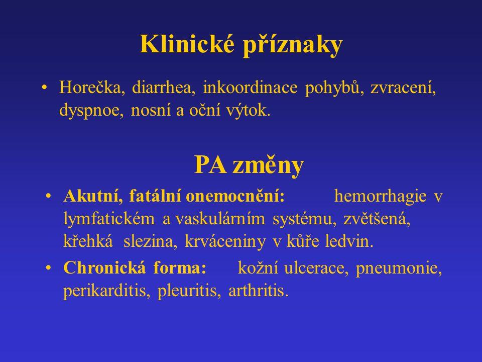 Klinické příznaky Horečka, diarrhea, inkoordinace pohybů, zvracení, dyspnoe, nosní a oční výtok. PA změny Akutní, fatální onemocnění:hemorrhagie v lym
