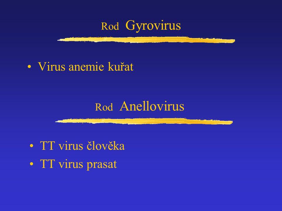 Rod Gyrovirus Virus anemie kuřat Rod Anellovirus TT virus člověka TT virus prasat