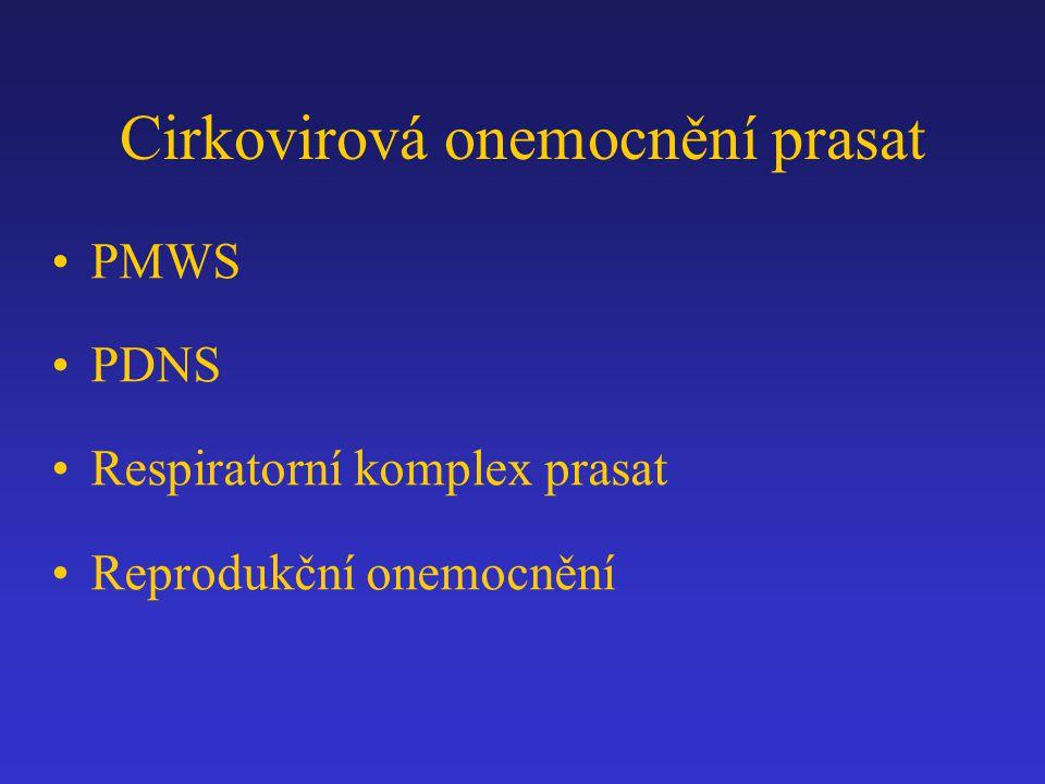 Cirkovirová onemocnění prasat PMWS PDNS Respiratorní komplex prasat Reprodukční onemocnění